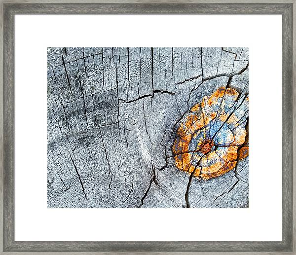 Abstract Woodgrain Upclose 6 Framed Print