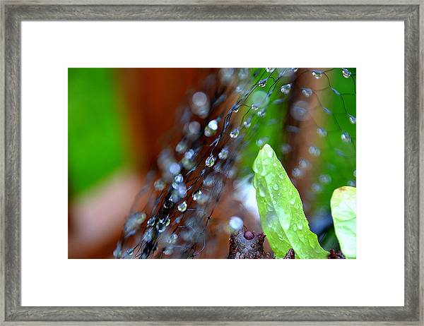Abstract05 Framed Print