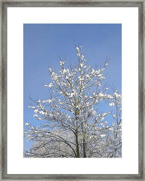Ash Tree In Winter Framed Print