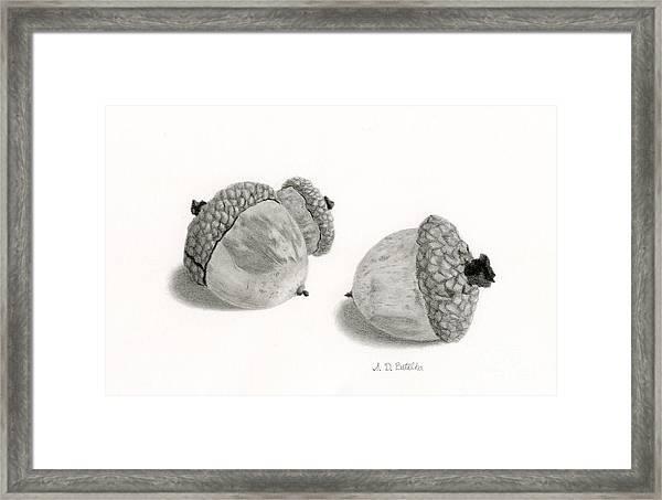 Acorns- Black And White Framed Print