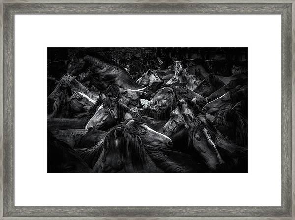 Acorralados Framed Print