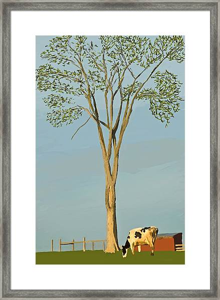 Addison County Vt Cow Framed Print