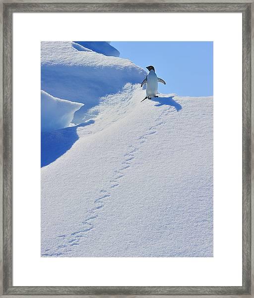 Adelie Penguin On Bergie Bit Framed Print