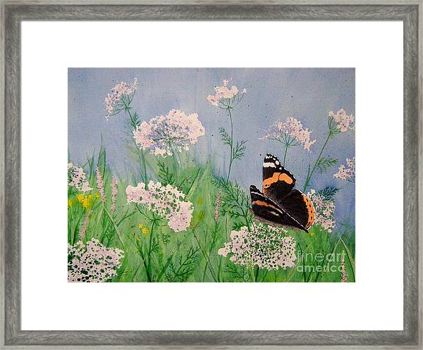 Admiral And Lace Framed Print