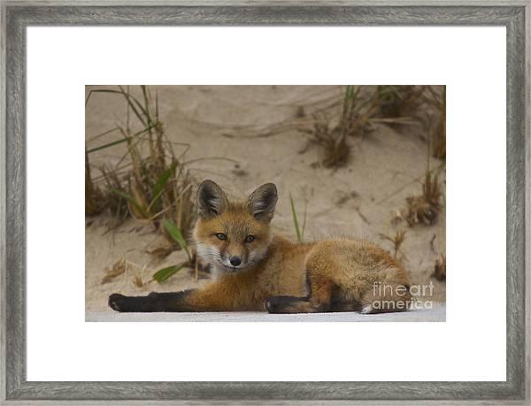 Adorable Baby Fox Framed Print