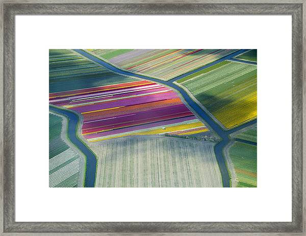 Aerial View Of Flower Fields In Spring Framed Print