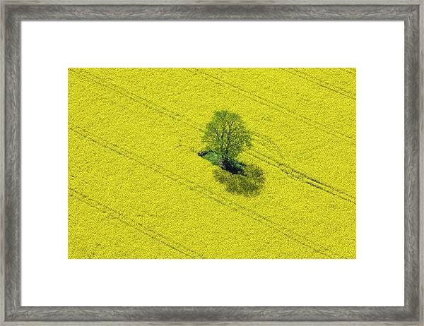 Aerial View Of Oilseed Rape Field Framed Print