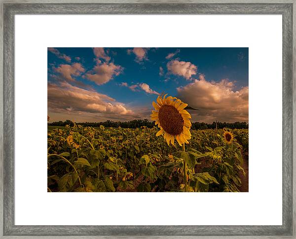 Aesthetic Ambition Framed Print