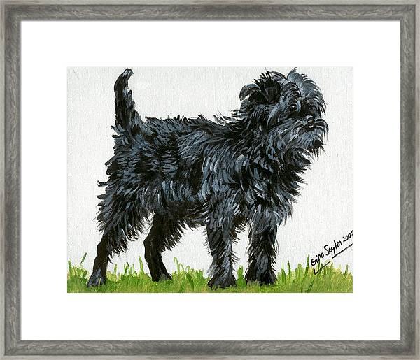 Affenpinscher Dog Framed Print by Olde Time  Mercantile