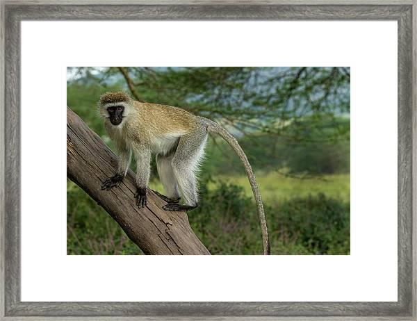 Africa, Kenya, Masai Mara National Framed Print
