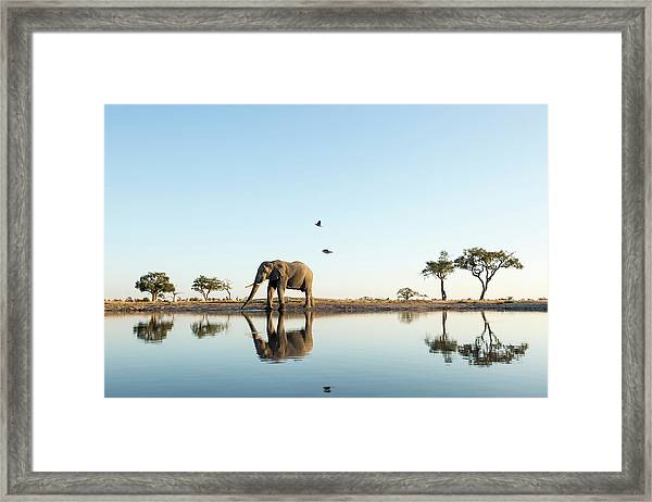 African Elephant At Water Hole, Botswana Framed Print