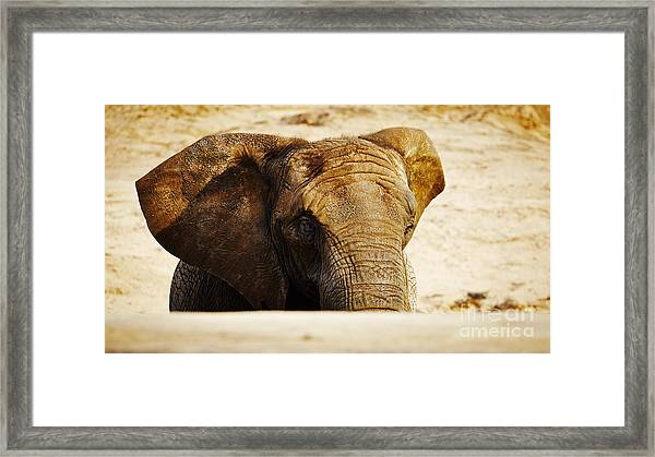 African Elephant Behind A Hill Framed Print