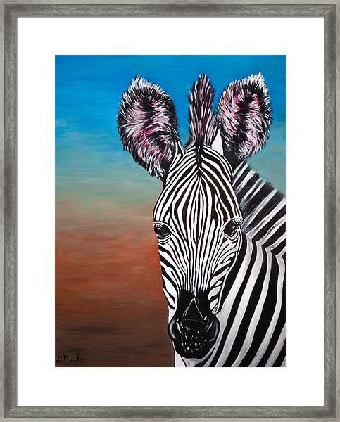 African Zebra Framed Print