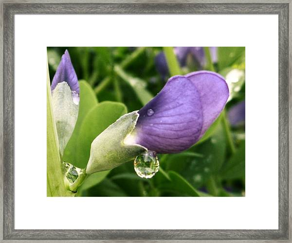 Framed Print featuring the photograph After The Rain by Gigi Dequanne
