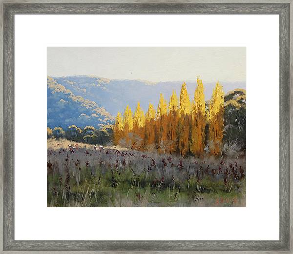 Afternoon Autumn Light Framed Print