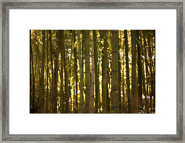 Afternoon In Sagano Framed Print
