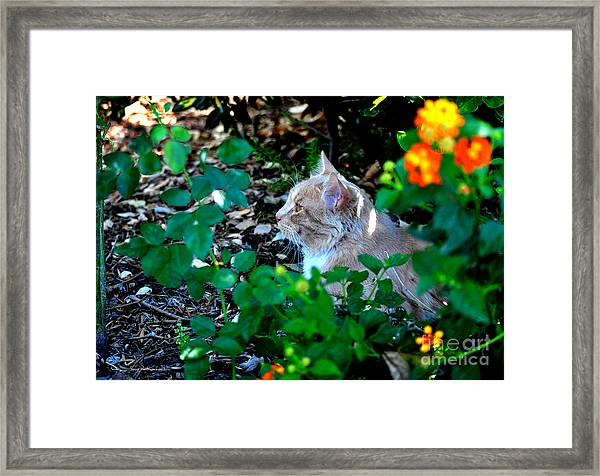 Afternoon Nap Interrupted Framed Print