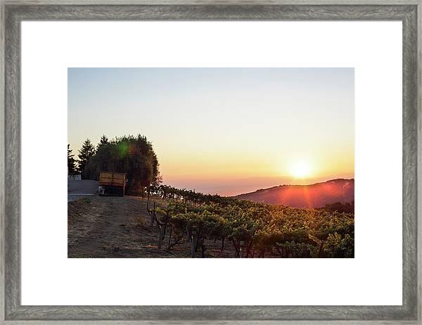 Afternoon Sun Setting Over Vineyard Framed Print
