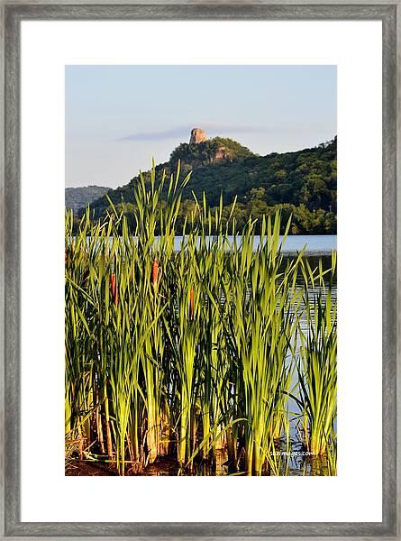 Afternoon Walk Framed Print