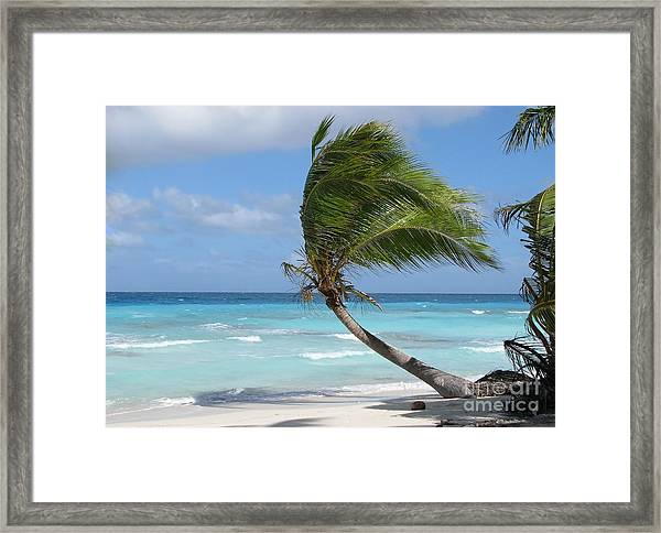 Against The Winds Framed Print