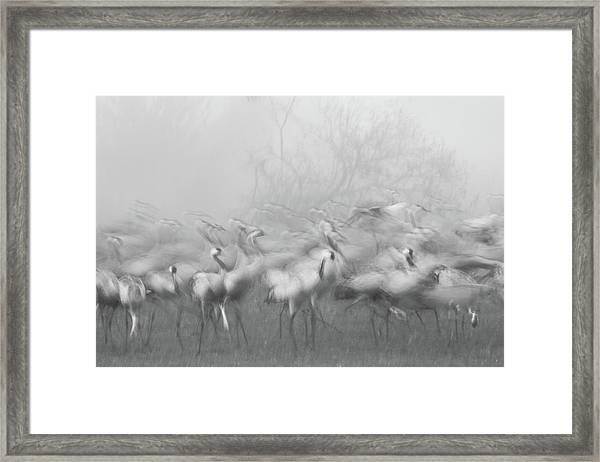 Agamon Hula Framed Print by Amnon Eichelberg