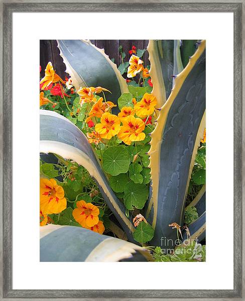 Agave And Nasturtiums Framed Print