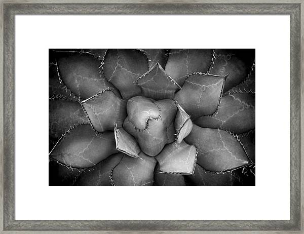 Agave Black And White Abstract Framed Print
