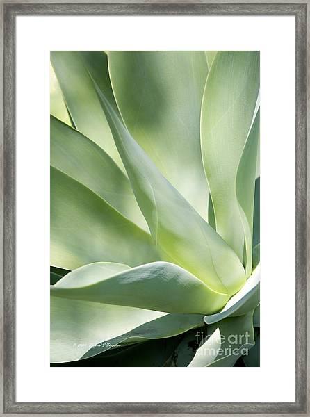 Agave Plant 2 Framed Print