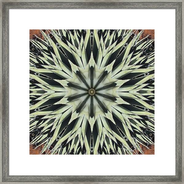 Agave Star Framed Print