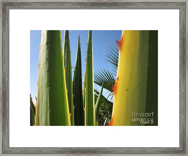 Agaves And Palm Trees Framed Print