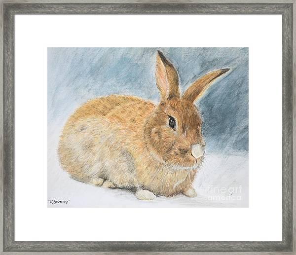 Agouti Pet Rabbit Framed Print