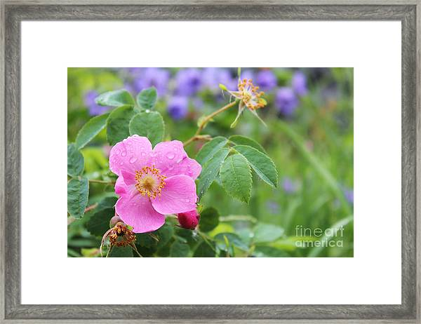 Alaska Wildflowers Framed Print
