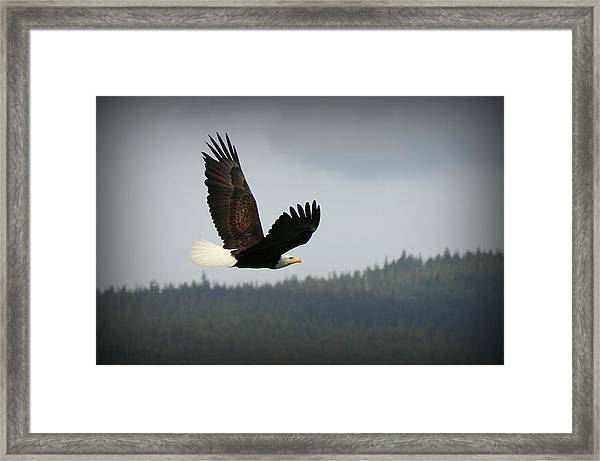 Alaskan Flight Framed Print