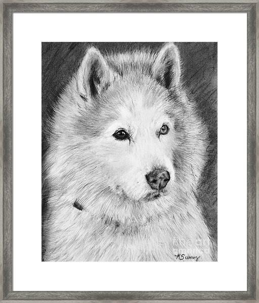 Alaskan Malamute Drawing Mardi Framed Print