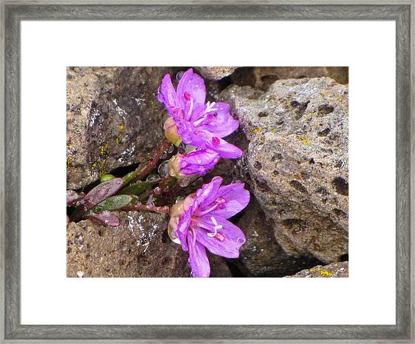 Alaskan Wildflower Framed Print