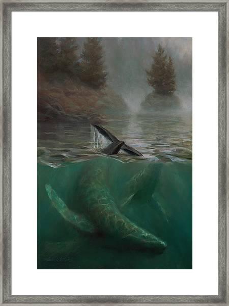 Humpback Whales - Underwater Marine - Coastal Alaska Scenery Framed Print