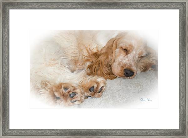 All Feet And Ears Framed Print