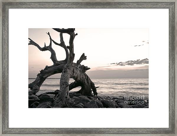 Framed Print featuring the photograph All Good Dogs Come Home by Glenda Wright