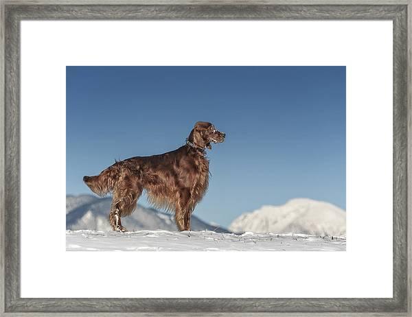 Allegro In Setterland Framed Print