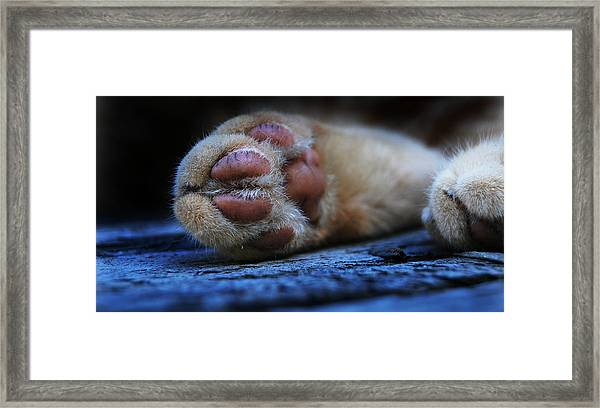 Alley Cat Snooze  Framed Print