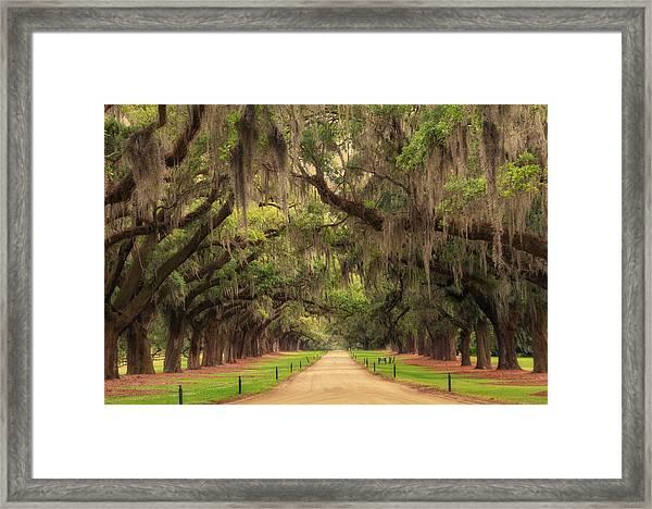 Alley Of The Oaks Framed Print