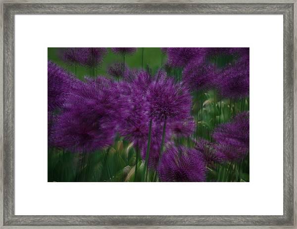 Allium Double Exposure Framed Print
