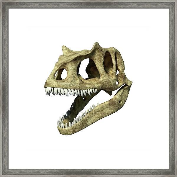 Allosaurus Dinosaur Skull Framed Print by Leonello Calvetti/science Photo Library