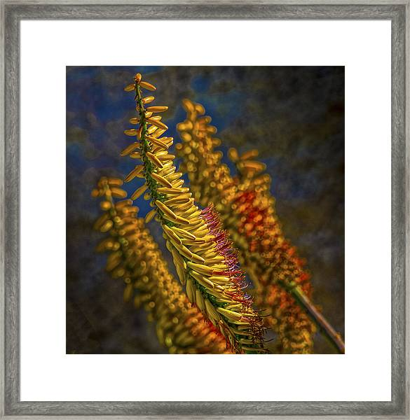 Aloe Flowers Framed Print