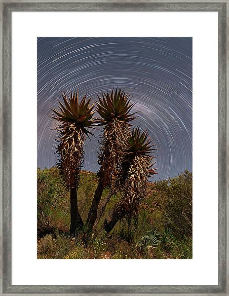 Aloe Ferox Star Trails Framed Print