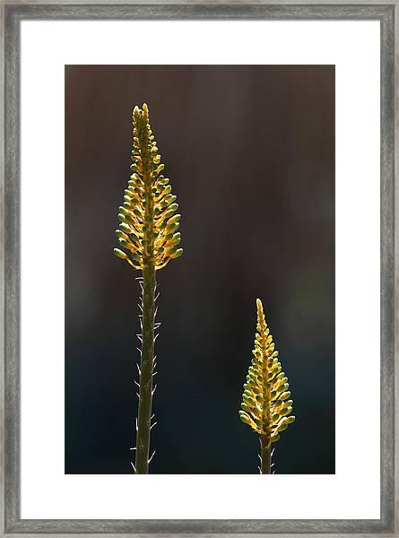 Aloe Plant Framed Print