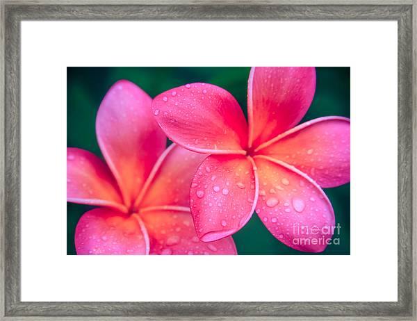Aloha Hawaii Kalama O Nei Pink Tropical Plumeria Framed Print
