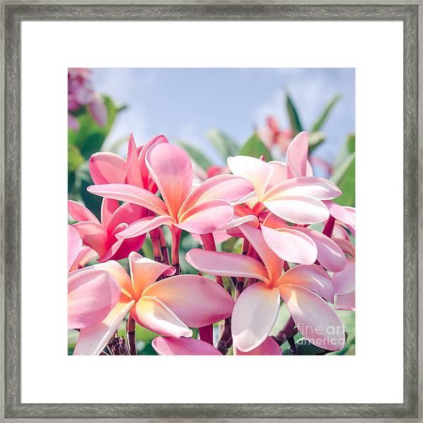 Aloha Framed Print