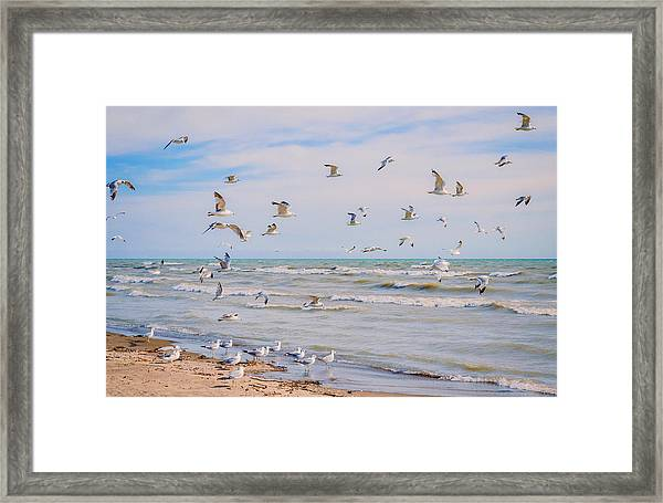 Framed Print featuring the photograph Along The Beach by Garvin Hunter