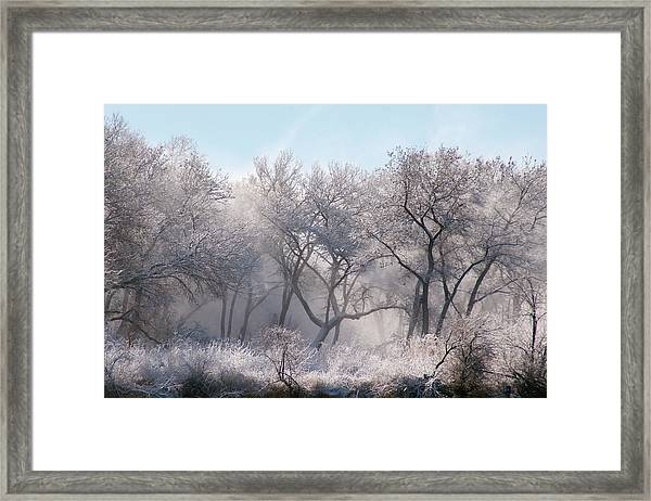 Along The Bosque, New Mexico Framed Print